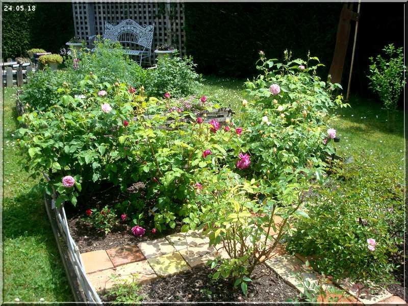Les rosiers Dsc01321