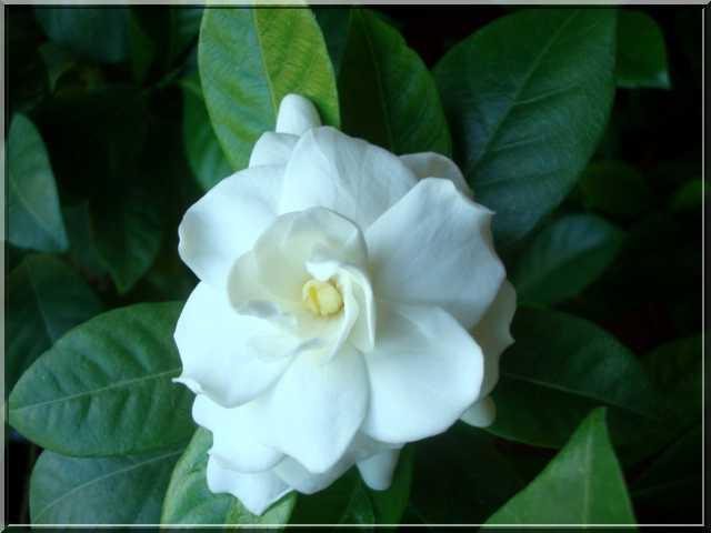 Une plante fleurie pas compliquée Dytail10