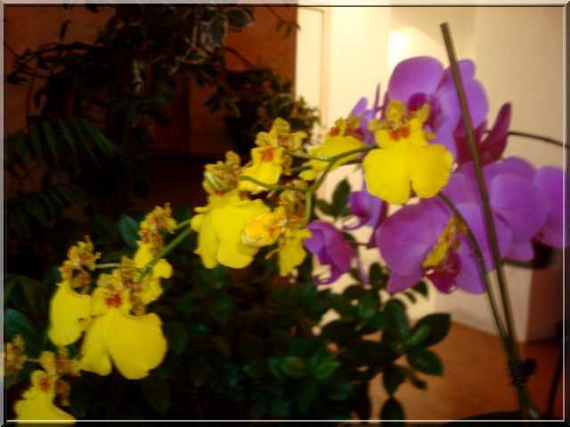 Des fleurs aux couleurs délicates Groupe13