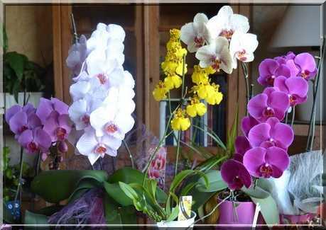 Des fleurs aux couleurs délicates Groupe14