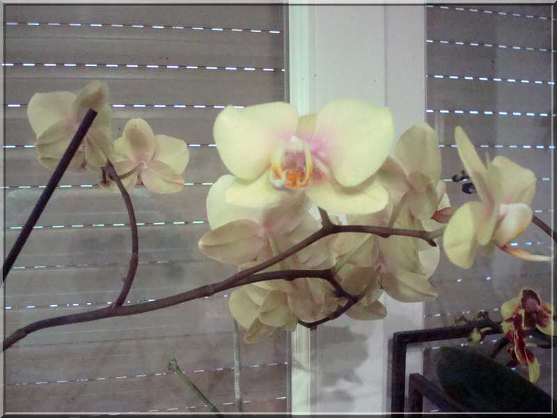 Couleur... orchidées !  Orchid12