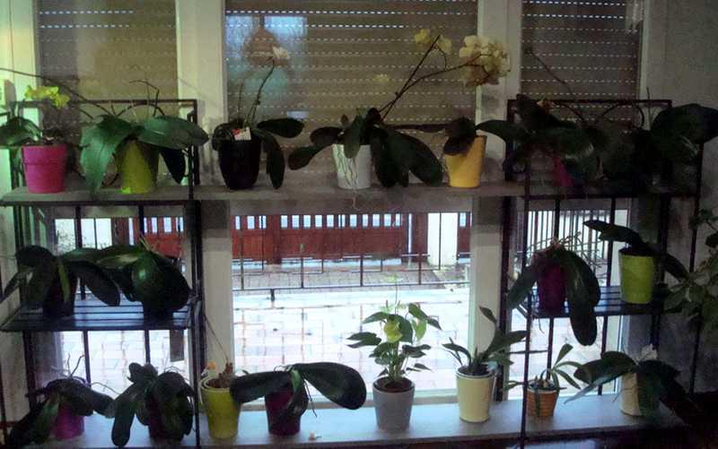 Couleur... orchidées !  Orchid13
