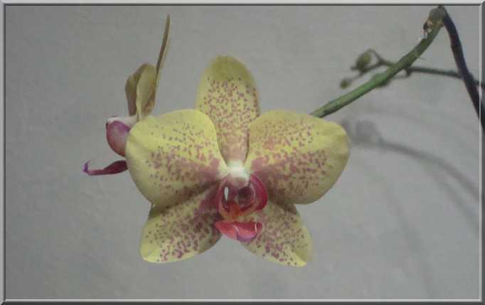 Couleur... orchidées !  Orchid15