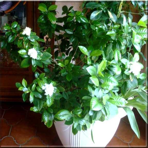 Une plante fleurie pas compliquée Photo_13