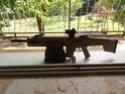 Mes armes/répliques à plombs/billes. (En perpétuelle évolution!!) Img_2014