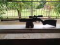 Mes armes/répliques à plombs/billes. (En perpétuelle évolution!!) Img_2028