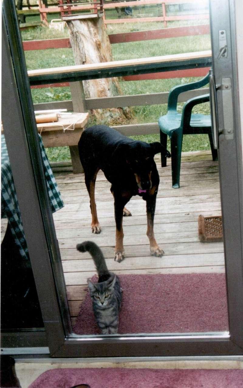 voici mes chats neron et angelo 1996_q10
