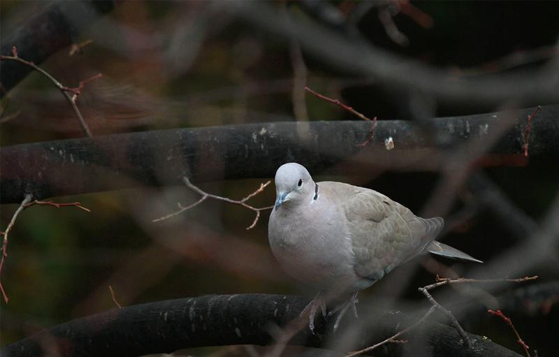[Ouvert] FIL - Oiseaux. - Page 6 Img_3810