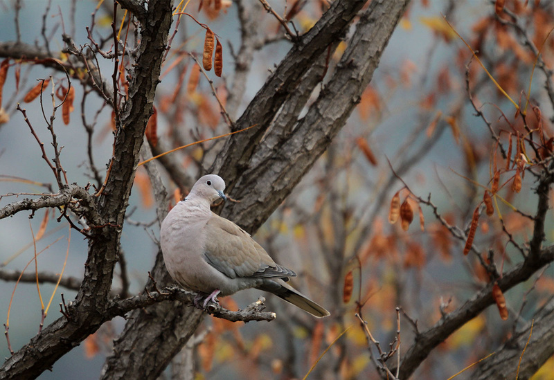 [Ouvert] FIL - Oiseaux. - Page 6 Img_3811