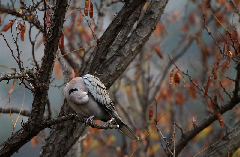 [Ouvert] FIL - Oiseaux. - Page 6 Img_3812
