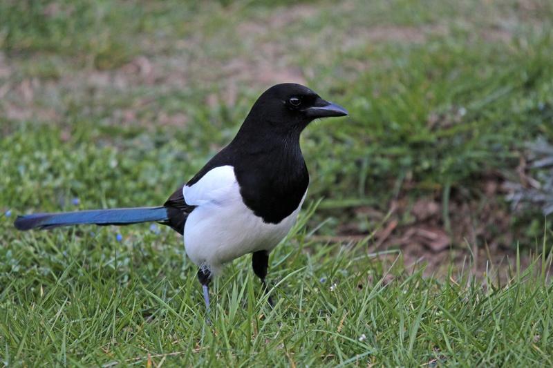 [Ouvert] FIL - Oiseaux. - Page 10 Img_4418