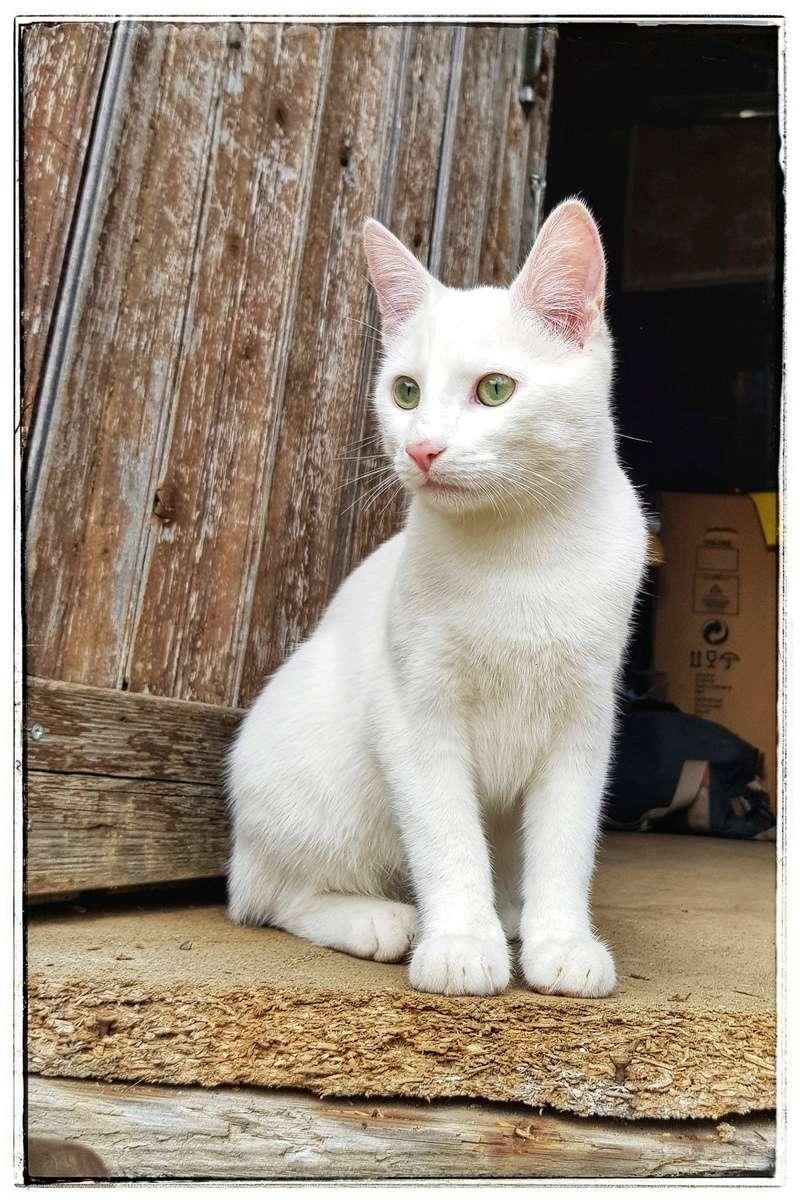 Mitsi, mâle tye européen blanc né le 20 septembre 2017 - Page 3 20180417