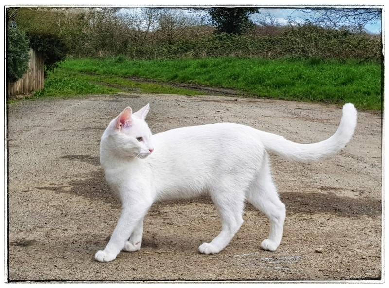 Mitsi, mâle tye européen blanc né le 20 septembre 2017 - Page 3 20180418