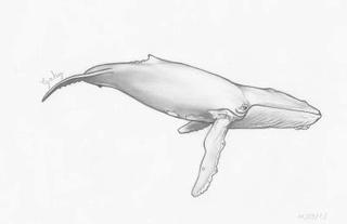 🦅 Galerie des Serdys 🦅 Balein10