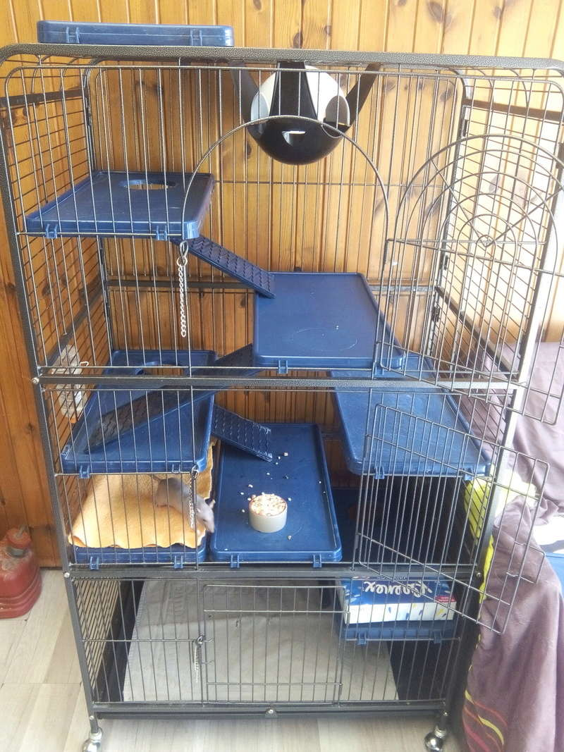 Help me ! Aménagement nouvelle cage ! Img_2044