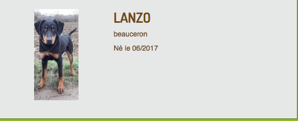 Max beauceron né en décembre 2016 et Lanzo beauceron né en juin 2017 (ADOPTÉ)  Captur34