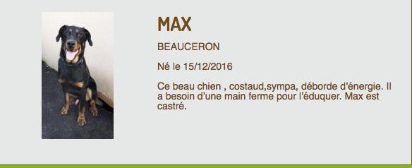 Max beauceron né en décembre 2016 et Lanzo beauceron né en juin 2017 (ADOPTÉ)  Captur35