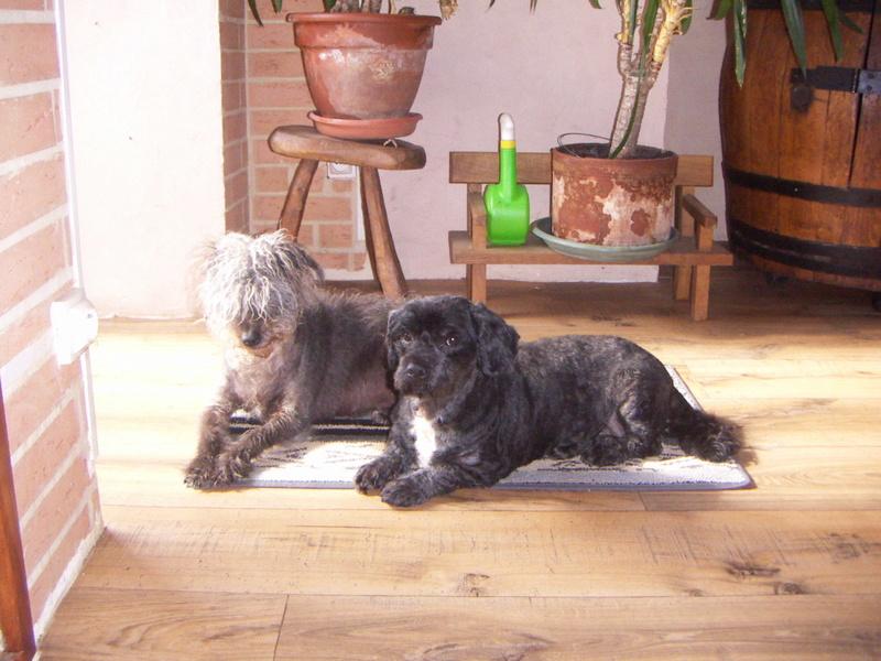 Photos et vidéos de vos animaux ! Hugo-n10