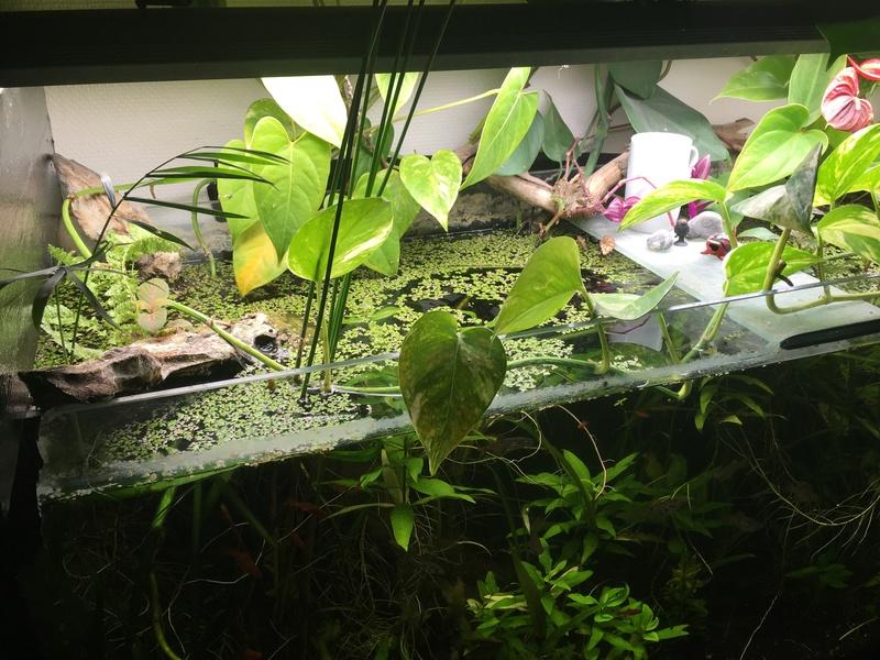de l' aquarium au riparium Caac1710