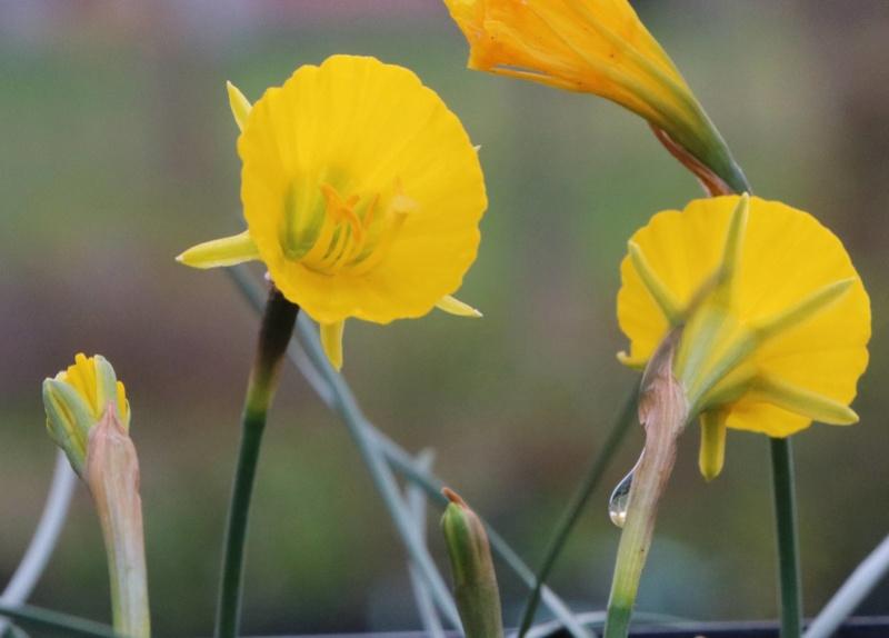 Narcisse 2018 & 2019 Narcis13