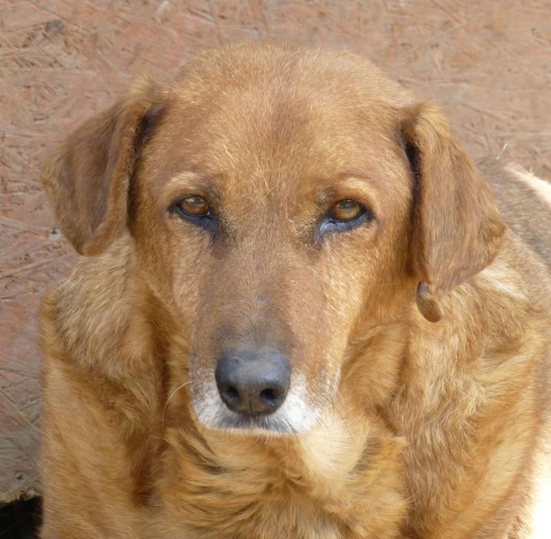 gigi - GIGI M-X, taille moyenne, 25 kg, né 2007 - Ancien de Backa (PENSION MILICA) - PRET A RENTRER ! Gigi10
