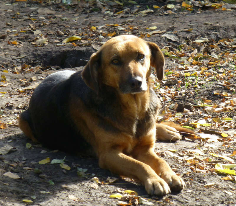 JELLY (ex JERRY) F-X, taille moyenne, env. 20 kg, née 2011 (BACKA) - Prise en charge SPA Pontarlier Jerry10