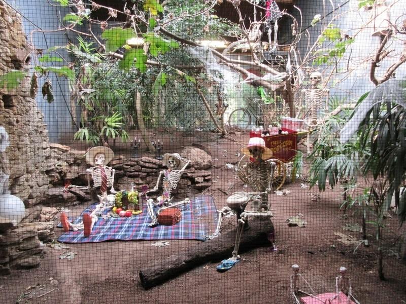 Le Parc aux Oiseaux de Villard les Dombes 00112