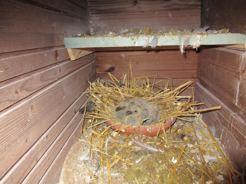 Pigeonnier : mes nouveaux amis - Page 2 00312