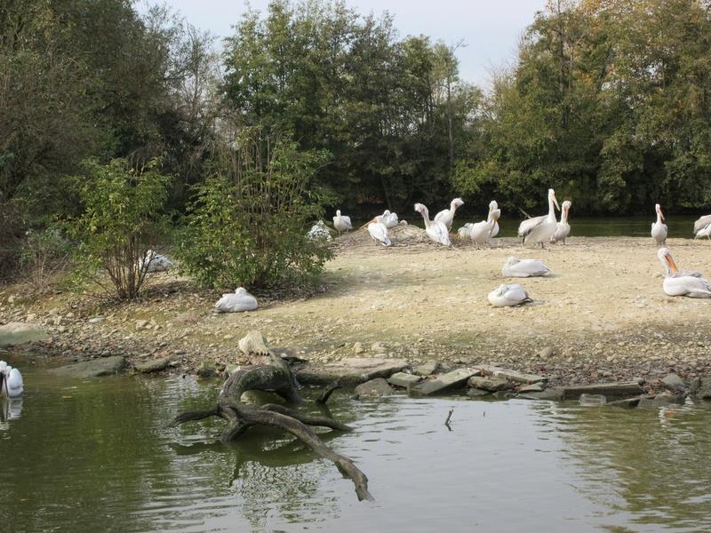 Le Parc aux Oiseaux de Villard les Dombes 00410