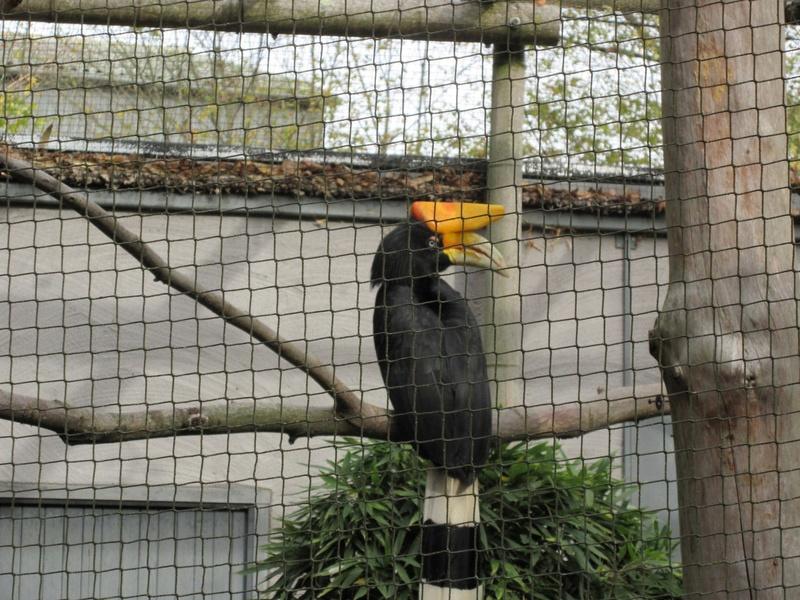 Le Parc aux Oiseaux de Villard les Dombes 00510