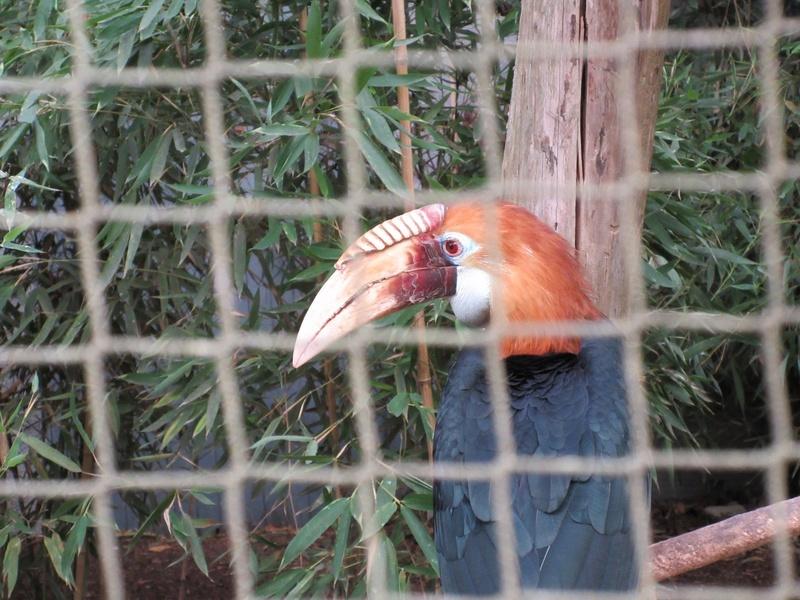 Le Parc aux Oiseaux de Villard les Dombes 00910