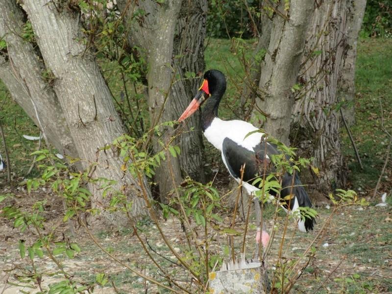 Le Parc aux Oiseaux de Villard les Dombes 01010