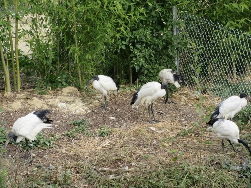 Le Parc aux Oiseaux de Villard les Dombes 01110