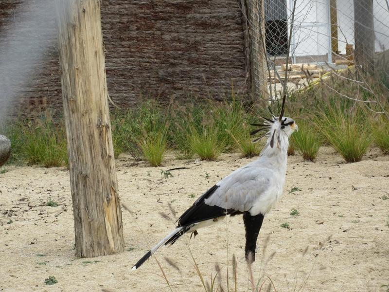 Le Parc aux Oiseaux de Villard les Dombes 01310