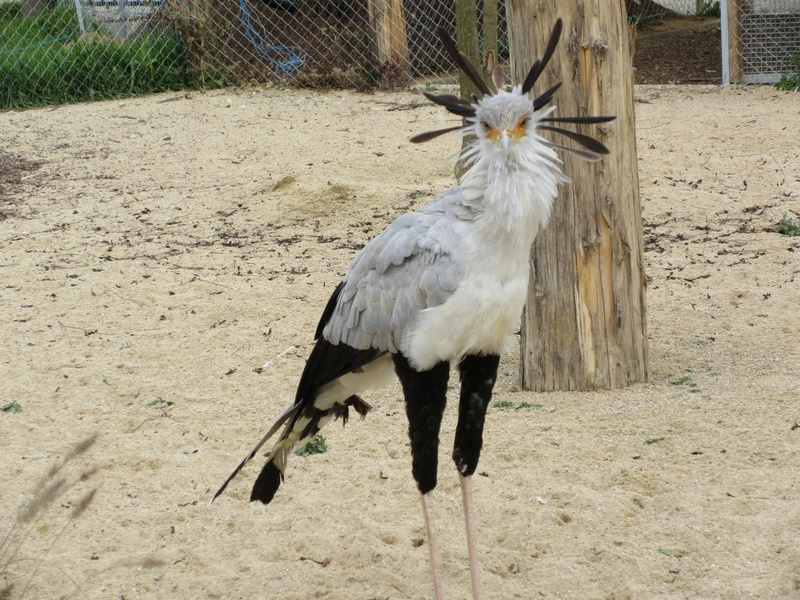 Le Parc aux Oiseaux de Villard les Dombes 01410
