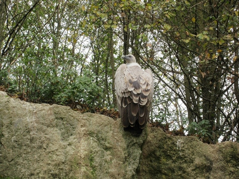 Le Parc aux Oiseaux de Villard les Dombes 01610