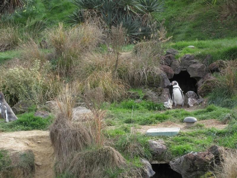 Le Parc aux Oiseaux de Villard les Dombes 02610