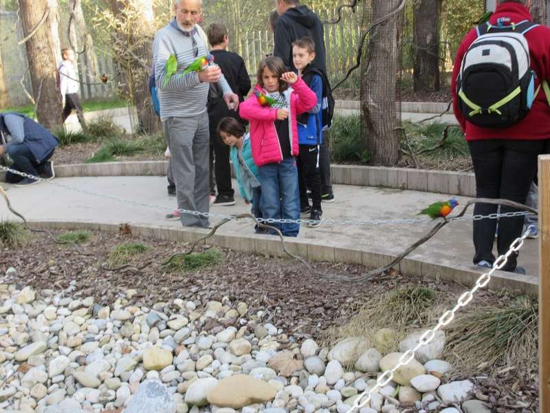 Le Parc aux Oiseaux de Villard les Dombes 03710