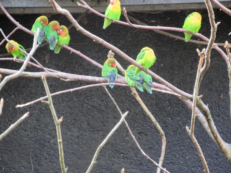 Le Parc aux Oiseaux de Villard les Dombes 03910