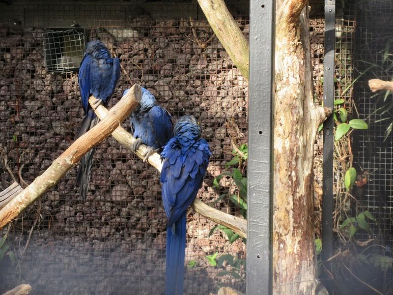 Le Parc aux Oiseaux de Villard les Dombes 04010