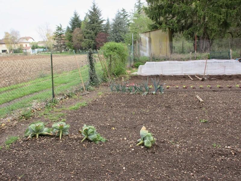 La saison potagère commence Img_0313