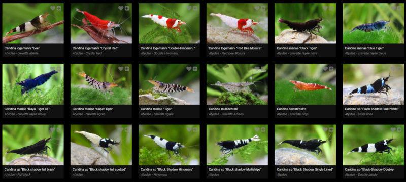 Fishipedia Image_10