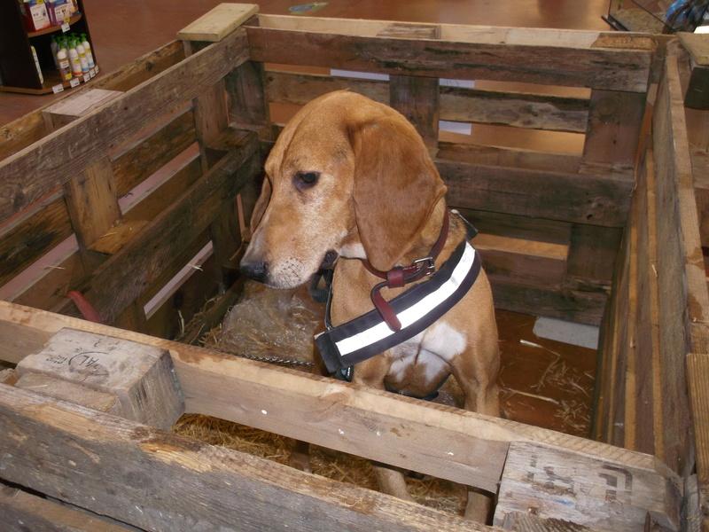 Week end adoption chien , chats (?) le 3, 4 et 5 Novembre à la Jardinerie de Fontenay le Comte - Page 2 Dscf4226