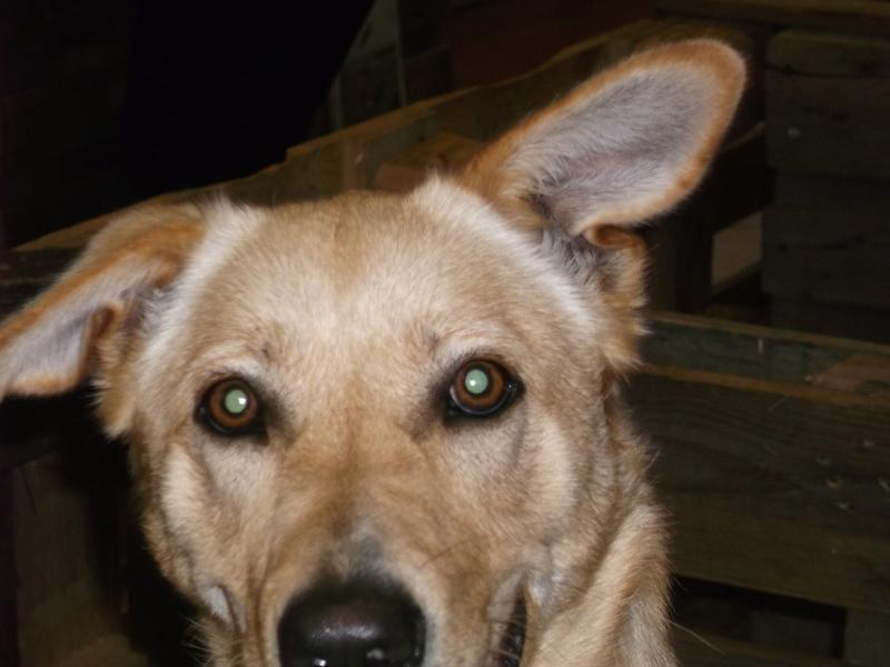 Week end adoption chien , chats (?) le 3, 4 et 5 Novembre à la Jardinerie de Fontenay le Comte - Page 2 Dscf4312