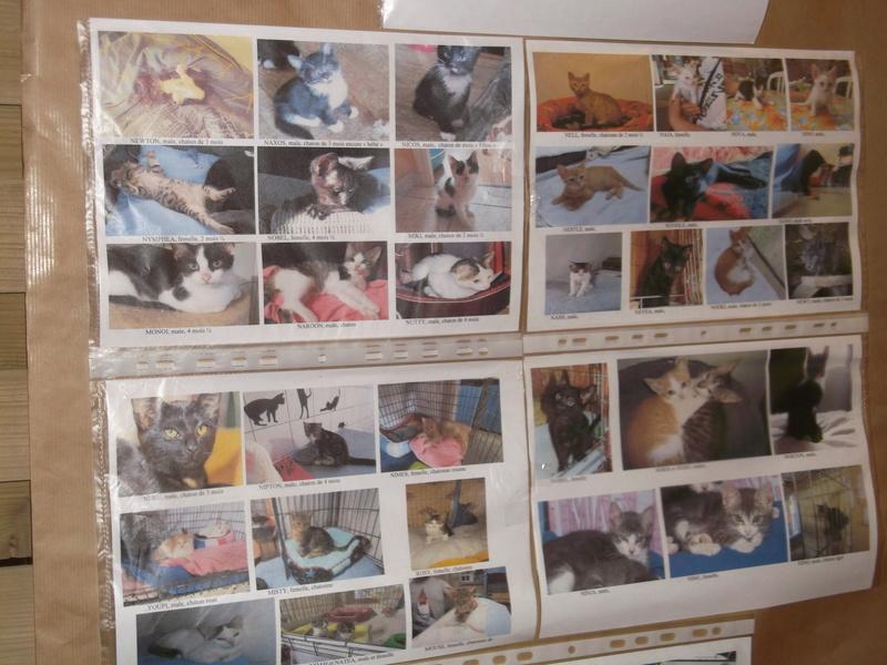 Week end adoption chien , chats (?) le 3, 4 et 5 Novembre à la Jardinerie de Fontenay le Comte - Page 2 Dscf4314