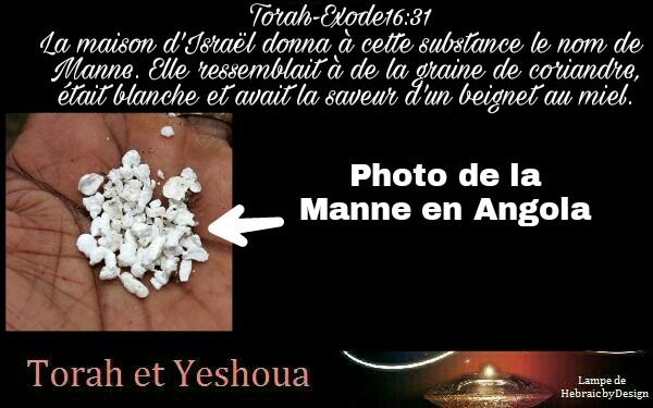 Miracle de la Manne en Angola, la Manne en image Picsar74