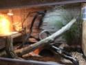 La construction de notre Terrarium pour Pogona Henrylawsoni  - Page 2 Img_0311