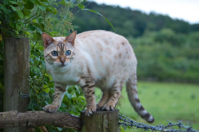 Cait's Kitty Profiles Adder10