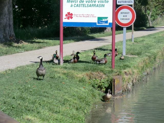 """Camping municipal de Montech (82) et le canal de la Gironde ( canal du """"midi"""") 45459510"""