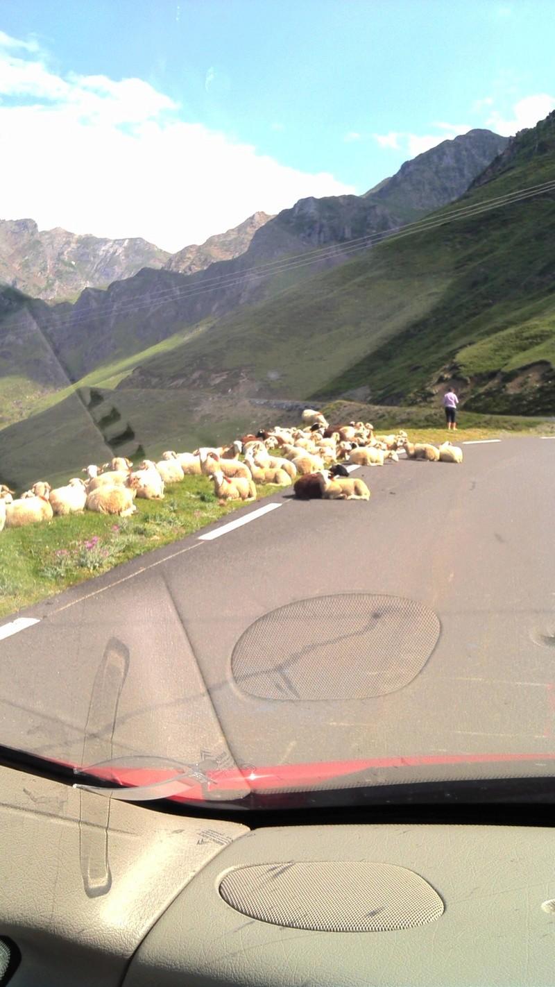 Ballade dans les Pyrénées 61555610